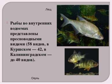 Рыбы во внутренних водоемах представлены пресноводными видами (58 видов, в Ку...