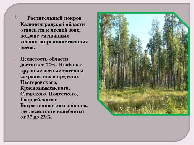 Растительный покров Калининградской области относится к лесной зоне, подз...