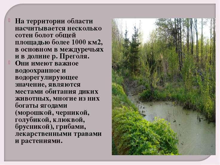 На территории области насчитывается несколько сотен болот общей площадью боле...