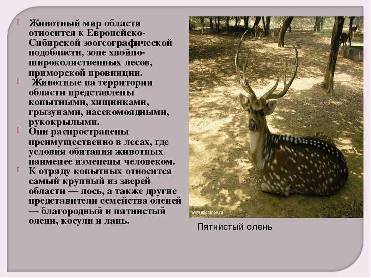 Животный мир области относится к Европейско-Сибирской зоогеографической подоб...