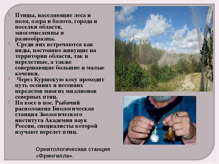 Птицы, населяющие леса и поля, озера и болота, города и поселки области, мног...