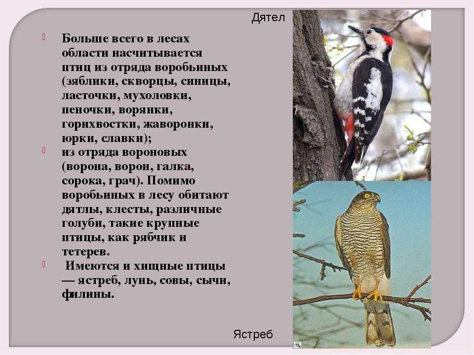 Больше всего в лесах области насчитывается птиц из отряда воробьиных (зяблики...