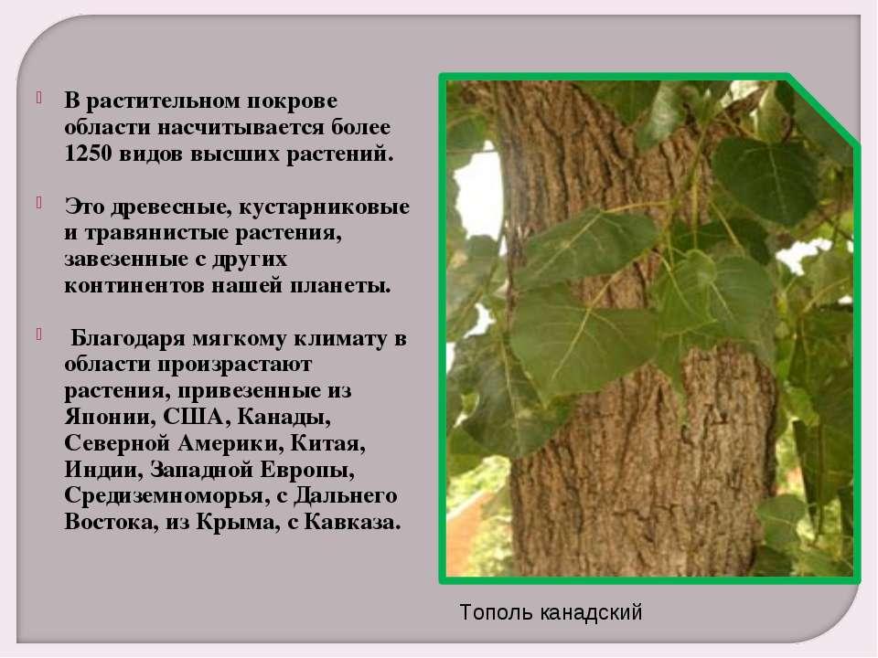 В растительном покрове области насчитывается более 1250 видов высших растений...