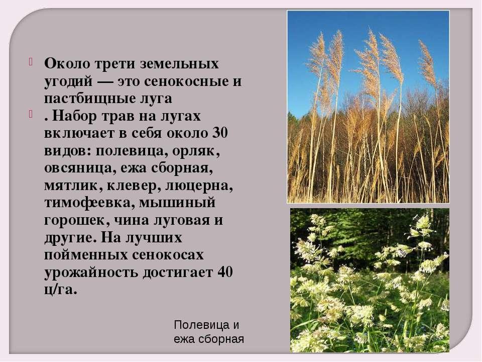 Около трети земельных угодий — это сенокосные и пастбищные луга . Набор трав ...