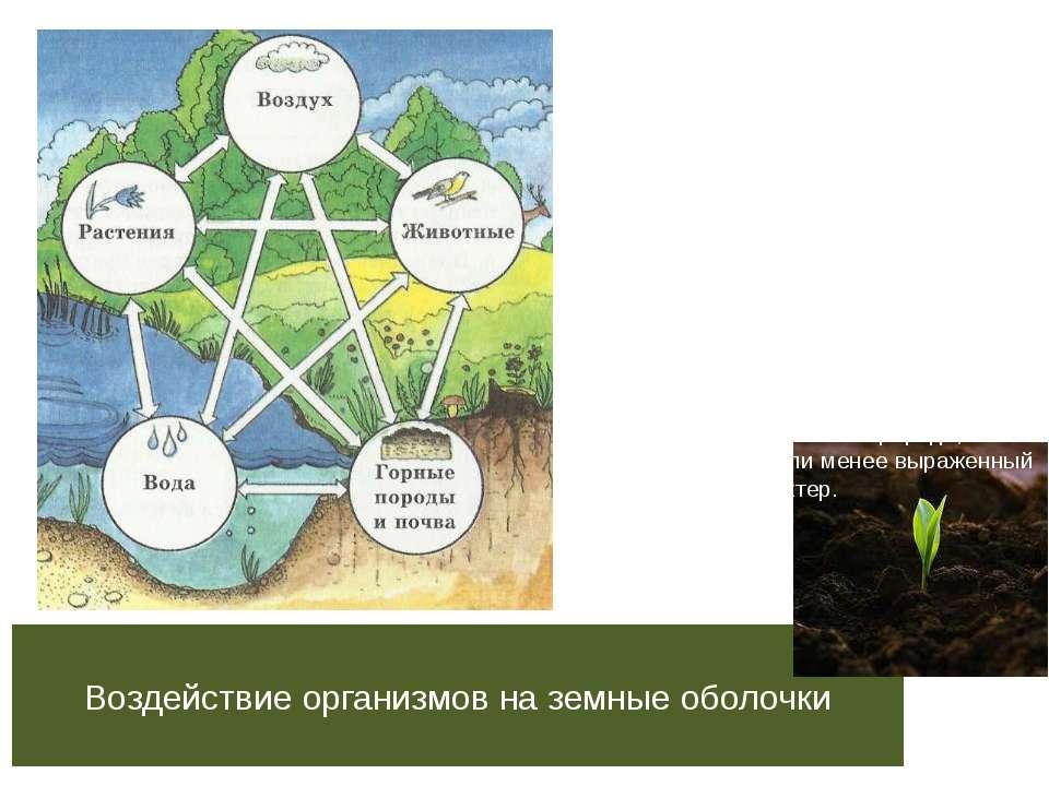Воздействие организмов на земные оболочки Деятельность живых организмов в био...