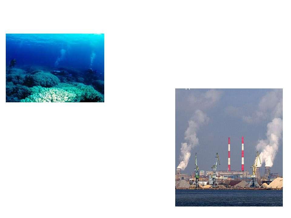 Гидросфера, являясь средой обитания морских организмов, обеспечивает существо...