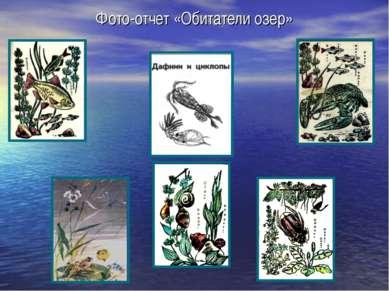 Фото-отчет «Обитатели озер»