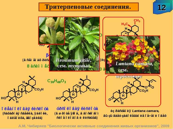 """Тритерпеновые соединения. 12 А.М. Чибиряев """"Биологически активные соединения ..."""