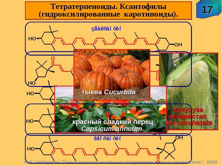 """А.М. Чибиряев """"Биологически активные соединения живых организмов"""", 2009 17 Те..."""