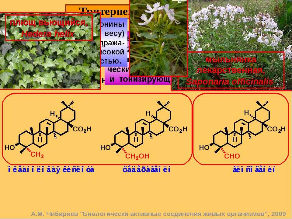 Тритерпеновые сапонины. 14 Это гликозиды, в состав которых входит тритерпенов...