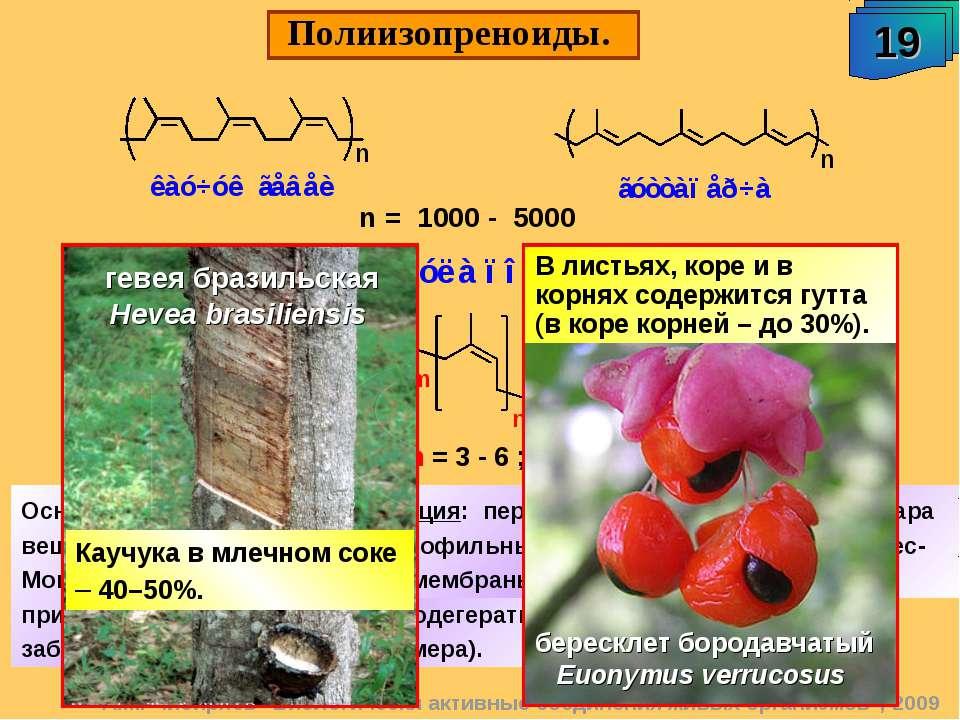 """Полиизопреноиды. 19 А.М. Чибиряев """"Биологически активные соединения живых орг..."""