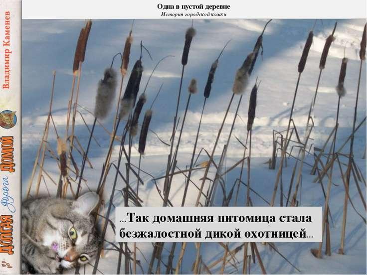 Одна в пустой деревне История городской кошки …Так домашняя питомица стала бе...