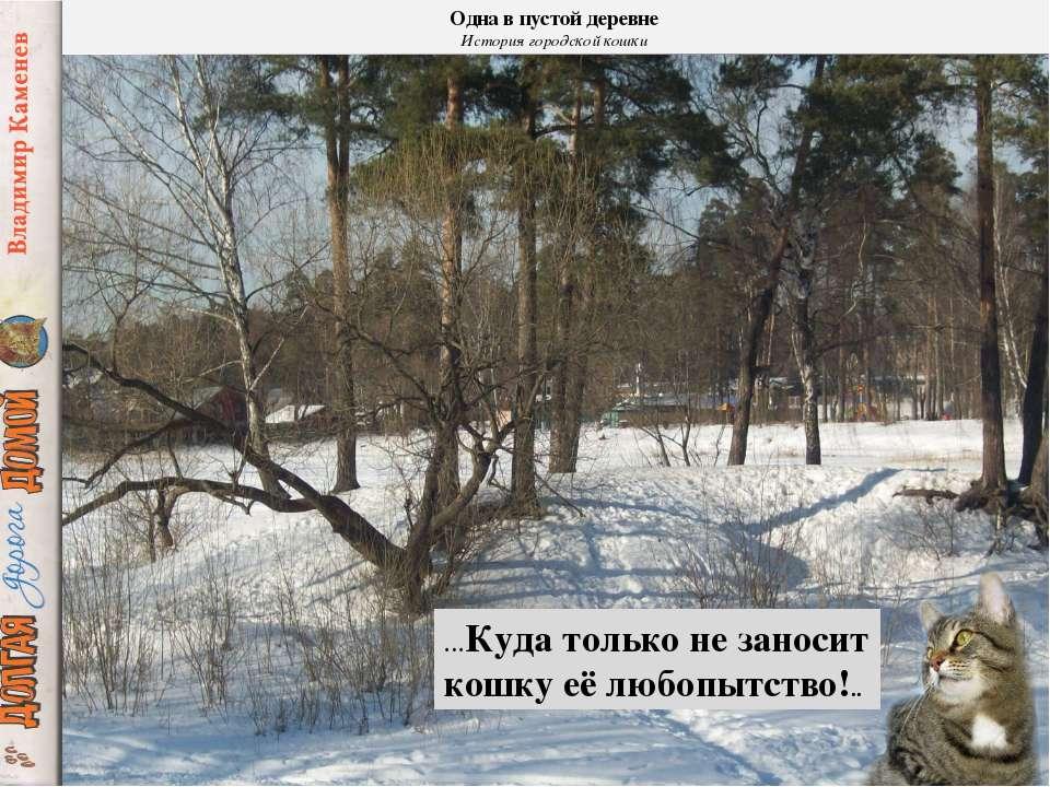 Одна в пустой деревне История городской кошки …Куда только не заносит кошку е...