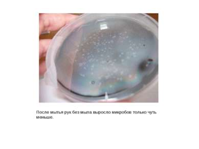 После мытья рук без мыла выросло микробов только чуть меньше.