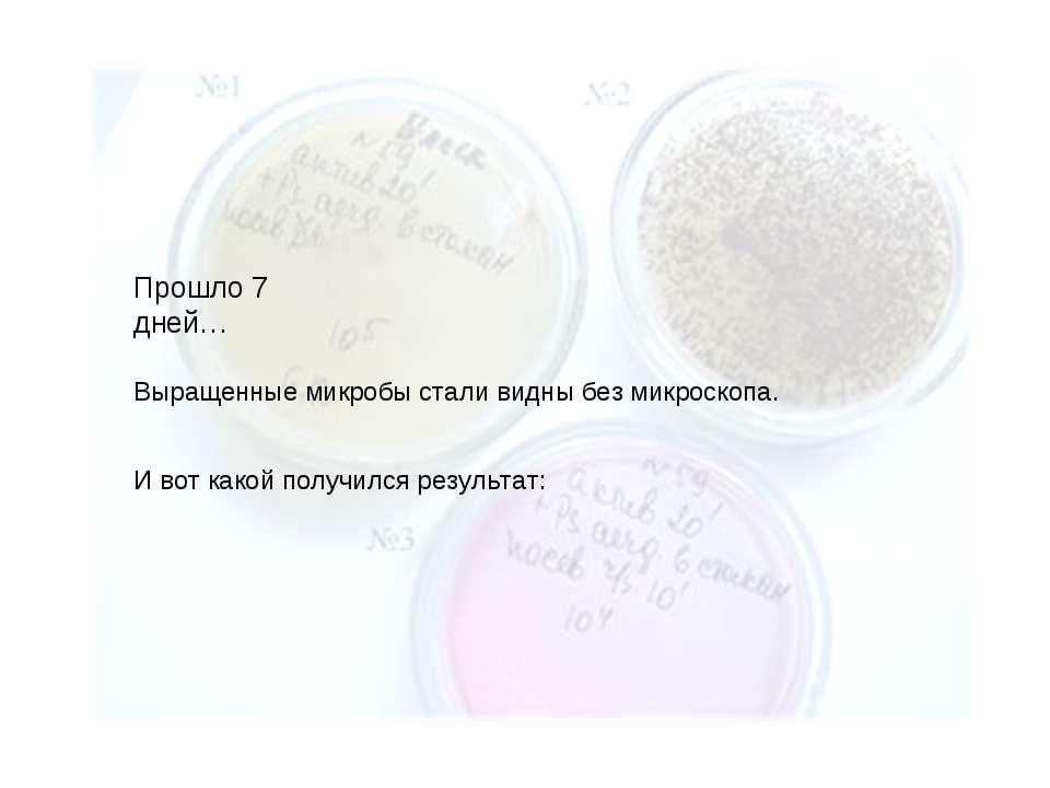 И вот какой получился результат: Прошло 7 дней… Выращенные микробы стали видн...
