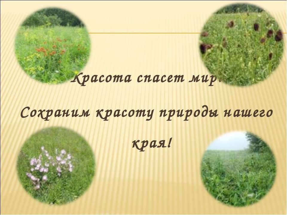 Красота спасет мир! Сохраним красоту природы нашего края!