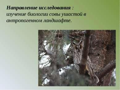 Направление исследования : изучение биологии совы ушастой в антропогенном лан...