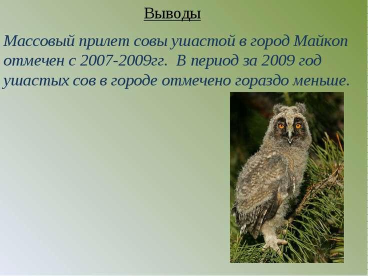 Массовый прилет совы ушастой в город Майкоп отмечен с 2007-2009гг. В период з...