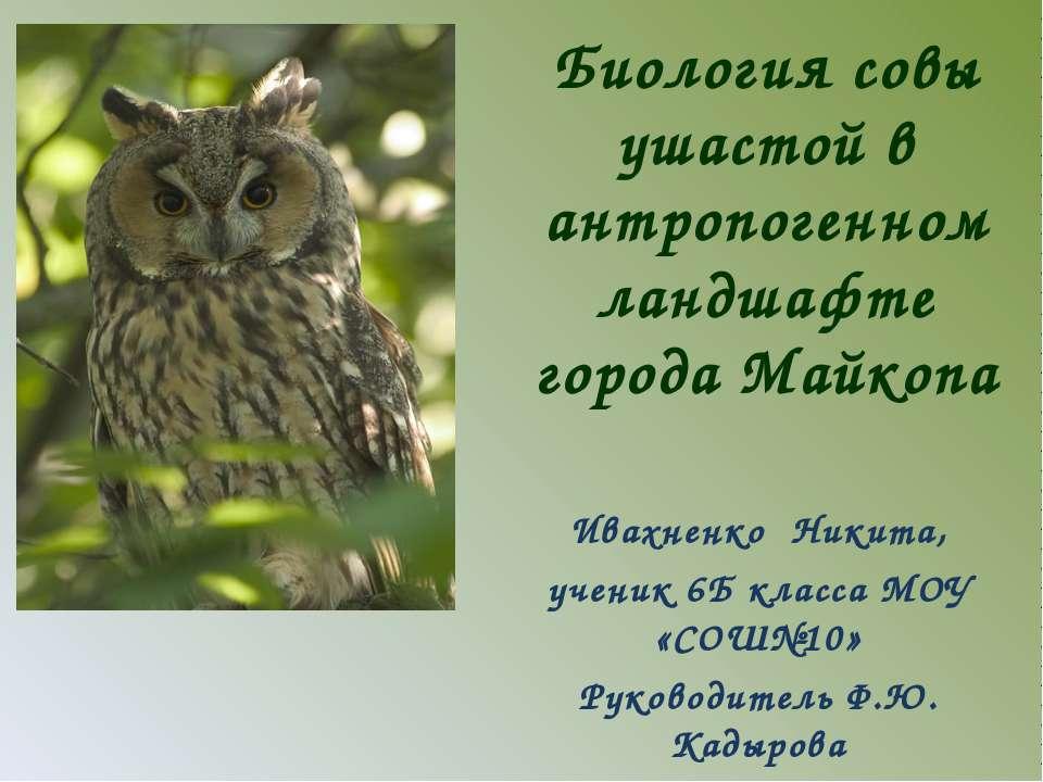 Биология совы ушастой в антропогенном ландшафте города Майкопа Ивахненко Ники...