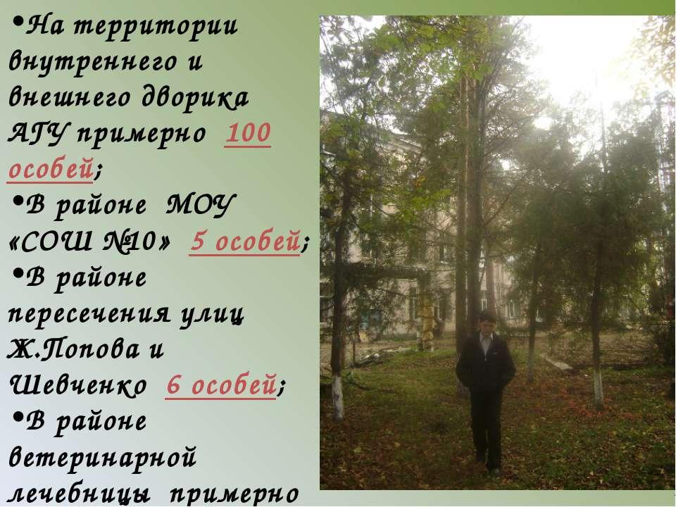 На территории внутреннего и внешнего дворика АГУ примерно 100 особей; В район...