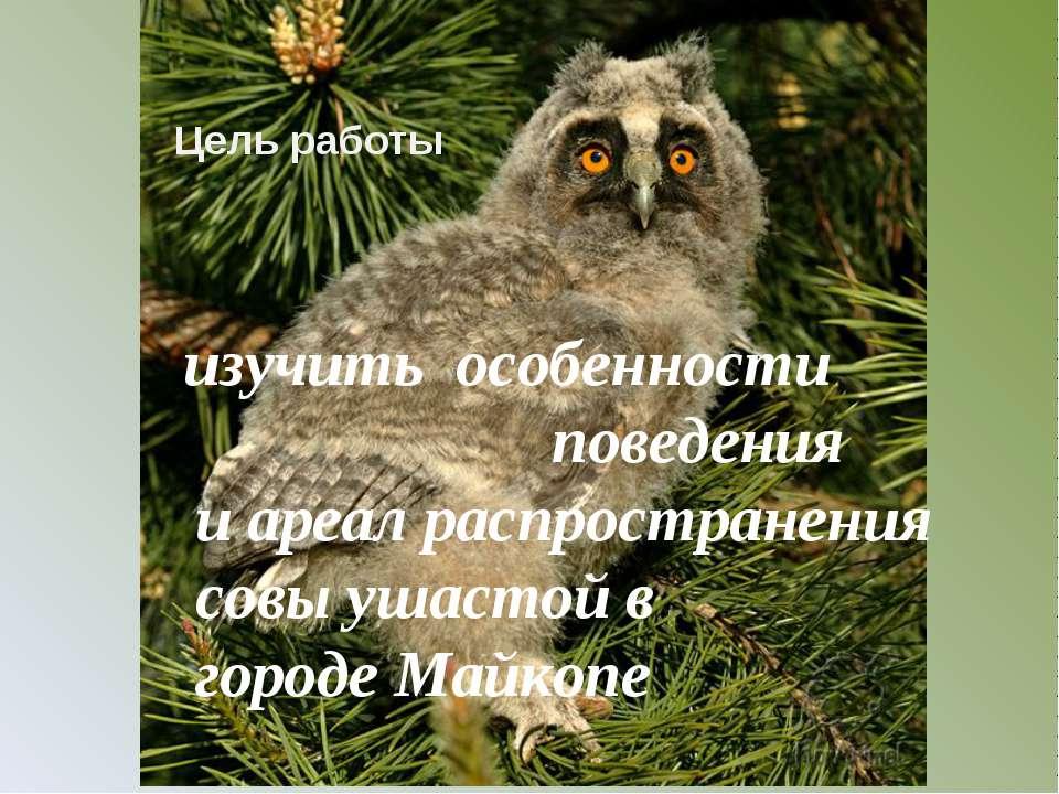 изучить особенности поведения и ареал распространения совы ушастой в городе М...