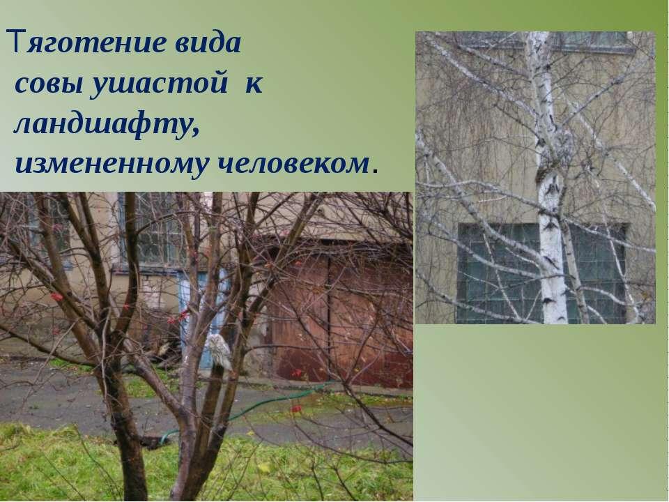 Тяготение вида совы ушастой к ландшафту, измененному человеком.