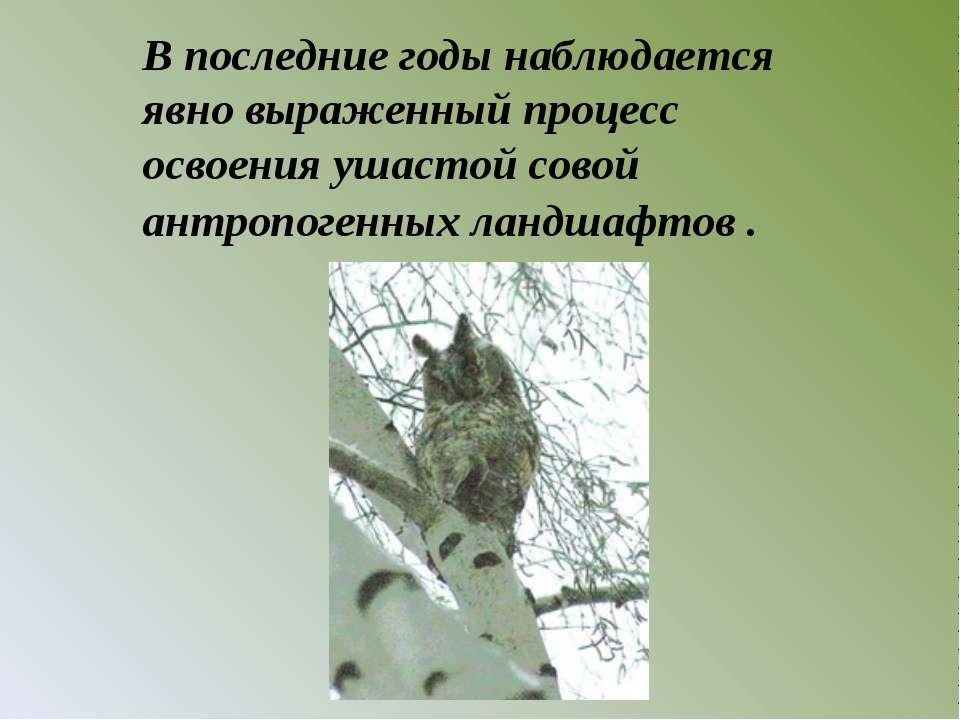 В последние годы наблюдается явно выраженный процесс освоения ушастой совой а...