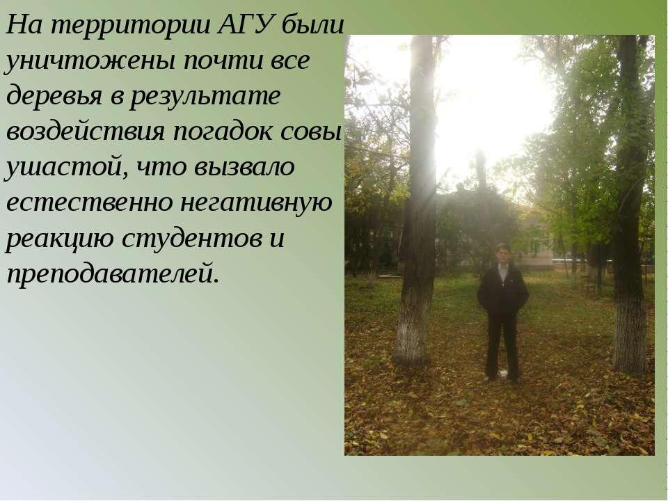 На территории АГУ были уничтожены почти все деревья в результате воздействия ...