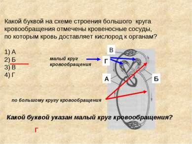Какой буквой на схеме строения большого круга кровообращения отмечены кровено...