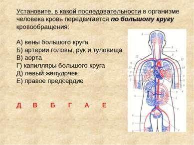 Установите, в какой последовательности в организме человека кровь передвигает...