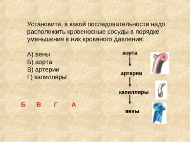 Установите, в какой последовательности надо расположить кровеносные сосуды в ...