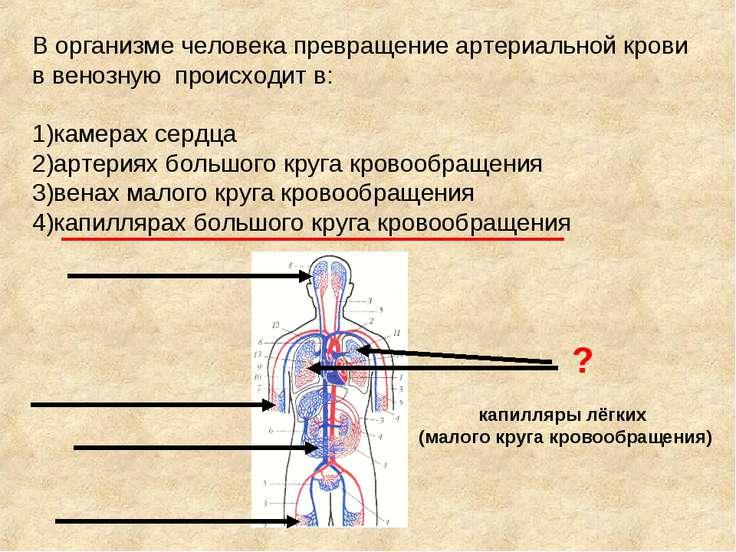 В организме человека превращение артериальной крови в венозную происходит в: ...
