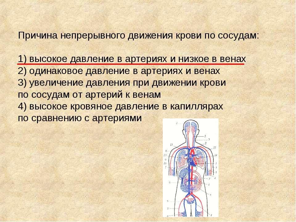 Причина непрерывного движения крови по сосудам: 1) высокое давление в артерия...