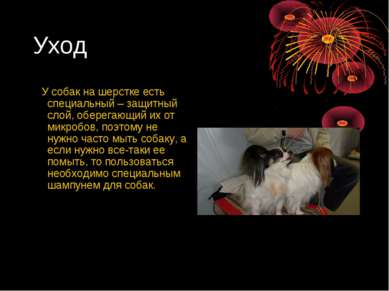 Уход У собак на шерстке есть специальный – защитный слой, оберегающий их от м...
