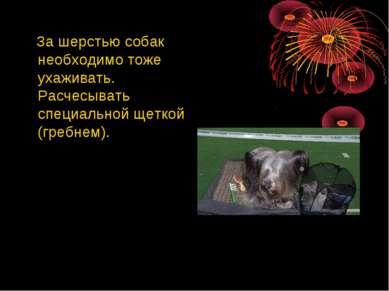 За шерстью собак необходимо тоже ухаживать. Расчесывать специальной щеткой (г...