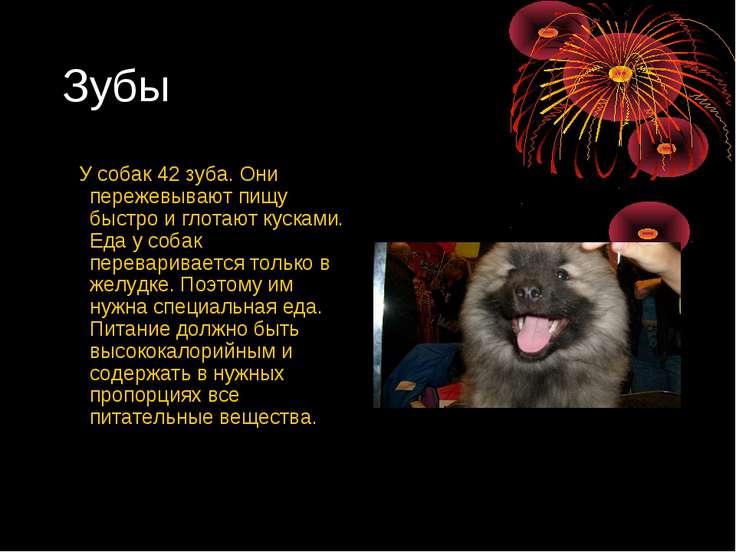 Зубы У собак 42 зуба. Они пережевывают пищу быстро и глотают кусками. Еда у с...