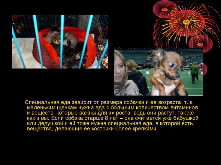 Специальная еда зависит от размера собачки и ее возраста, т. к. маленьким щен...