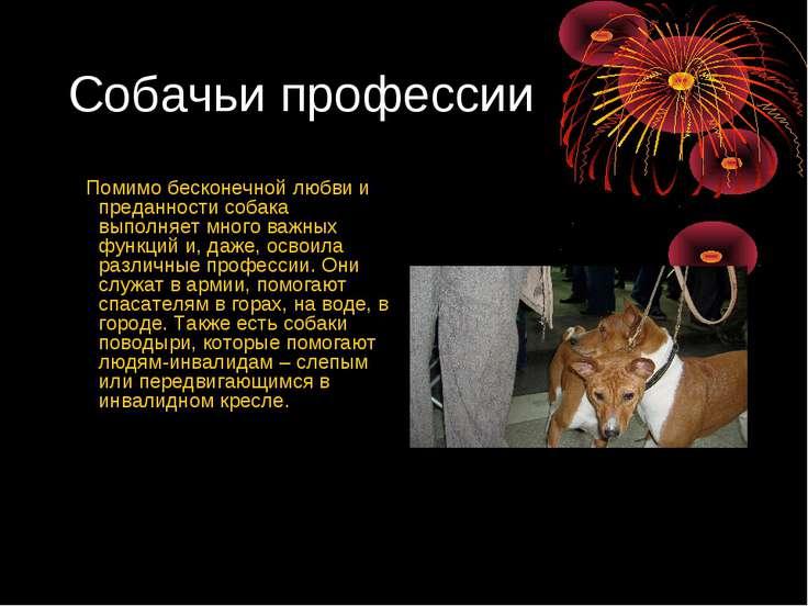 Собачьи профессии Помимо бесконечной любви и преданности собака выполняет мно...