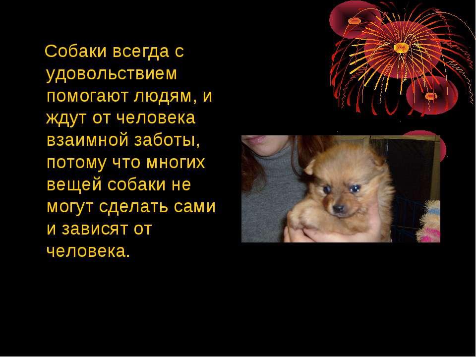Собаки всегда с удовольствием помогают людям, и ждут от человека взаимной заб...