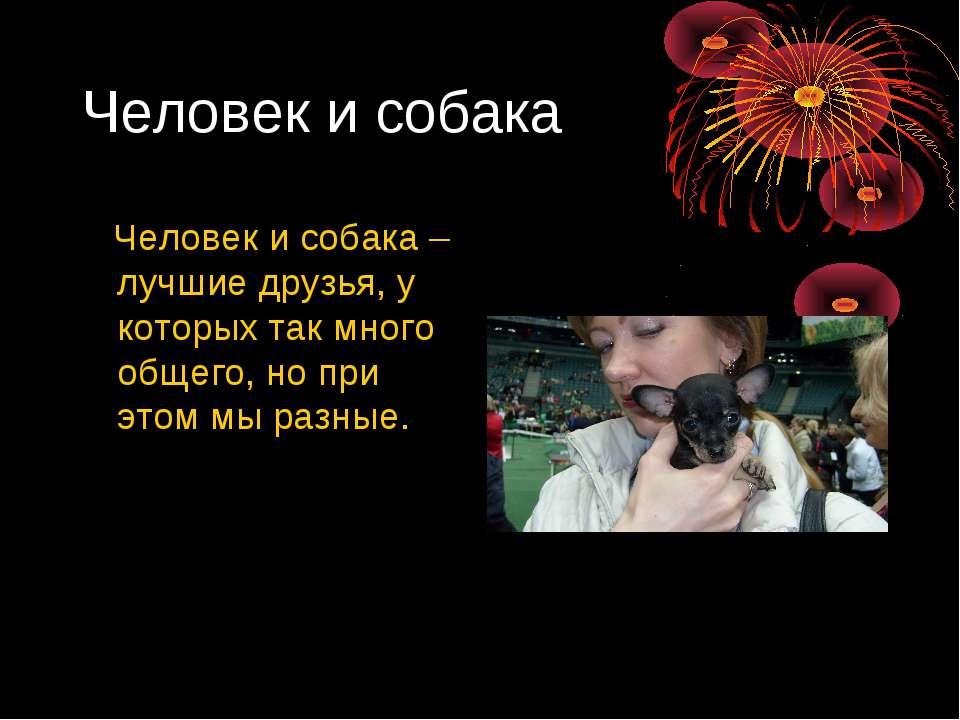 Человек и собака Человек и собака – лучшие друзья, у которых так много общего...