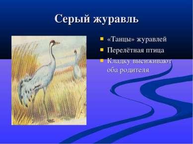 Серый журавль «Танцы» журавлей Перелётная птица Кладку высиживают оба родителя
