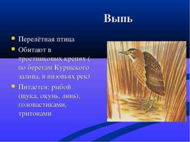 Выпь Перелётная птица Обитают в тростниковых крепях ( по берегам Куршского за...
