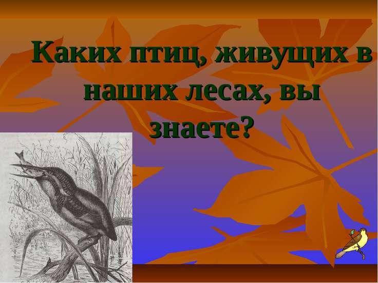 Каких птиц, живущих в наших лесах, вы знаете?