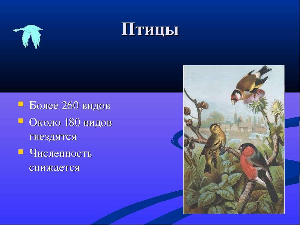 Птицы Более 260 видов Около 180 видов гнездятся Численность снижается