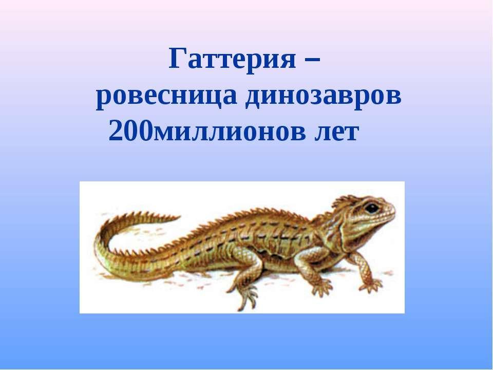 Гаттерия – ровесница динозавров 200миллионов лет