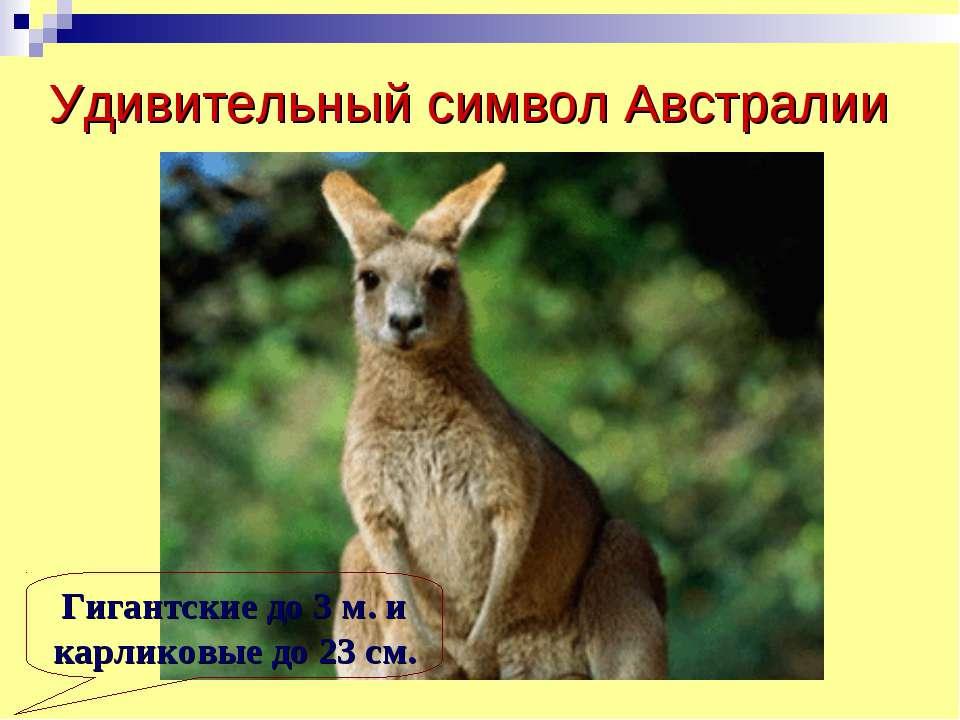 Удивительный символ Австралии Гигантские до 3 м. и карликовые до 23 см.