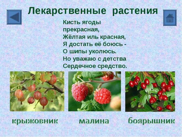 Кисть ягоды прекрасная, Жёлтая иль красная, Я достать её боюсь - О шипы уколю...