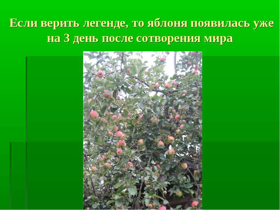 Если верить легенде, то яблоня появилась уже на 3 день после сотворения мира