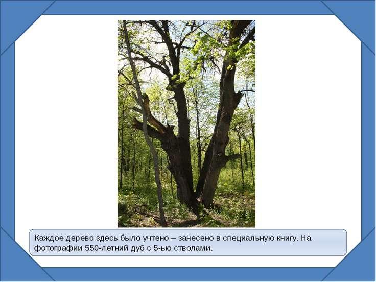 Каждое дерево здесь было учтено – занесено в специальную книгу. На фотографии...