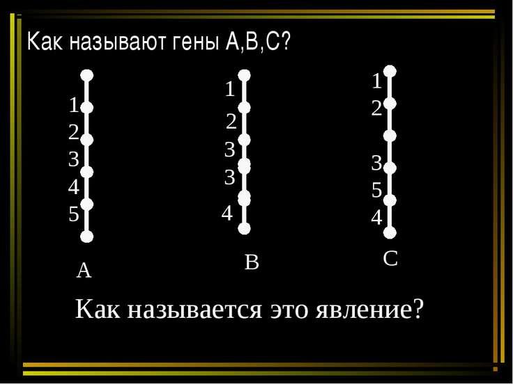 Как называют гены А,В,С? А В С 1 2 3 4 5 1 2 3 5 4 1 2 3 3 4 Как называется э...